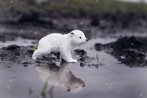 3-Глобальне потепл_ння загрожує б_лим ведмедям_Орищенко Дарина_Запор_жжя